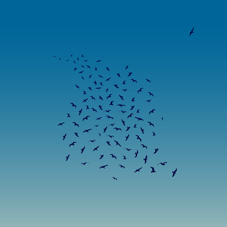 Seagulls Flying as night falls. Vector illustration of Flying Seagulls Silhouettes. Illustration