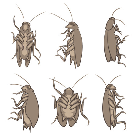 Illustration Of Various Cockroaches From Different Views