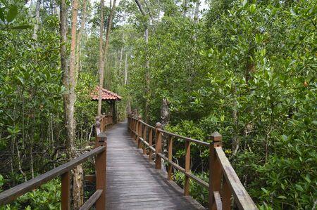 a walkaway to mangrove forest at Tanjung Piai, Johor, Malaysia