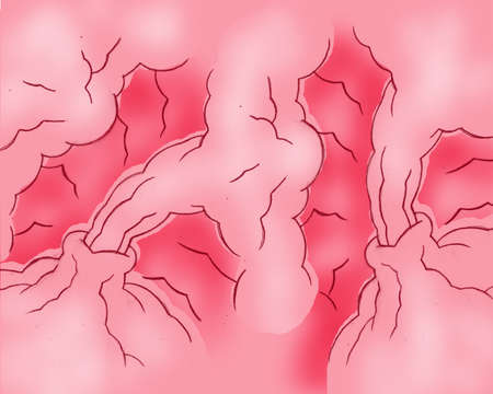gut: Stomach Illustration