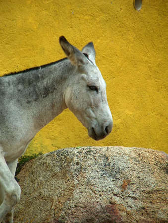 donkey in Mexico photo