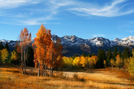 orange grove:  Fall colors on a high mountain meadow with blue sky and clouds  Stock Photo