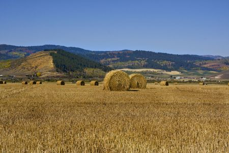 freed: Grain field in the autumn with mountains in the background