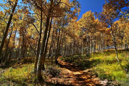 orange grove: High mountain road in the fall showing all the fall colors Stock Photo