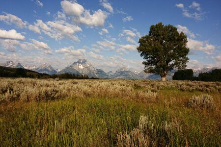 Grand Teton National Park in the Summer with blue skys and reflections Stock Photo - 5334108