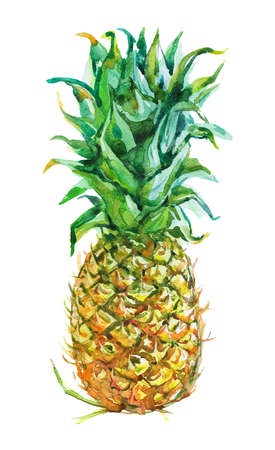 Watercolor fresh pineapple. Hand drawn tropical fruit on white background. Painting food illustration