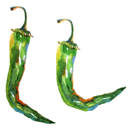 Painting jalapeno on white background. Hand drawn vegetable illustration. Watercolor chili hot pepper Stockfoto