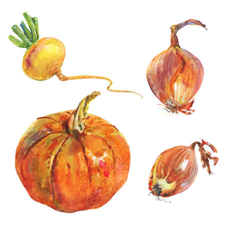 Watercolor pumkin, onion, turnip. Painting set of roots on white background. Hand drawn vegetable illustration Zdjęcie Seryjne - 129157562