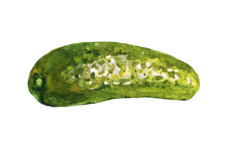 Watercolor painting pickle cucumber on white background. Hand drawn vegetable illustration Stok Fotoğraf