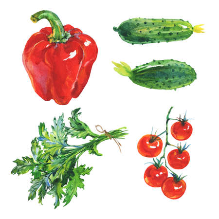Watercolor set of fresh vegetables and greenery on white background. Hand drawn red paprika pepper, parsley, cucumbers, cherry tomatoes