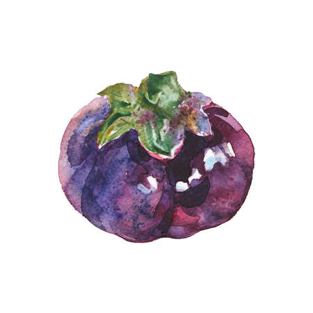 Watercolor painting eggplant on white background. Hand drawn vegetable illustration Stok Fotoğraf