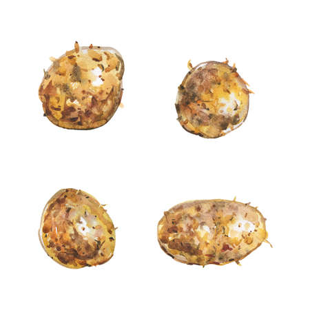 Watercolor painting set of potato on white background. Hand drawn vegetable illustration