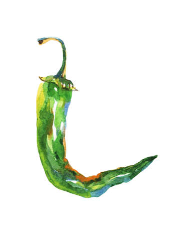 Painting jalapeno on white background. Hand drawn vegetable illustration. Watercolor chili hot pepper Stockfoto - 129157944