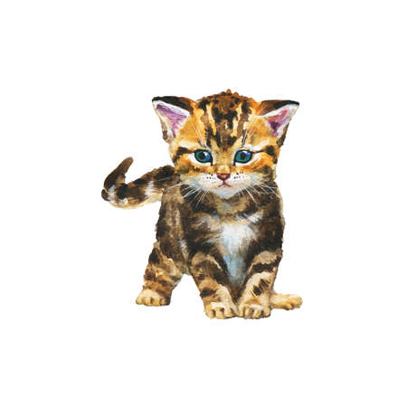 Painting blotched tabby kitten. Hand drawn realistic cat on white background. Watercolor animal illustration