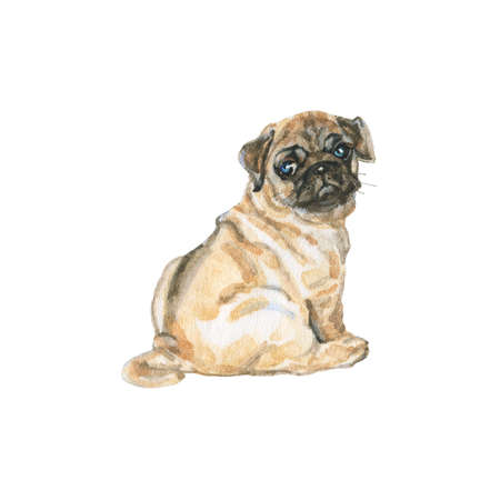 Watercolor pug. Hand drawn realistic dog portrait on white background. Painting pet illustration Stock fotó