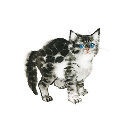 Watercolor grey fluffy kitten. Hand drawn british shorthair cat on white background. Painting animal illustration