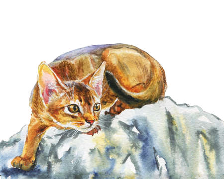 Watercolor abyssinian cat. Hand drawn beautiful short hair pet on white background. Painting animal illustration Фото со стока