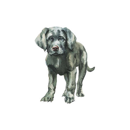 Watercolor labrador puppy. Hand drawn realistic dog portrait on white background. Painting pet illustration Stock fotó