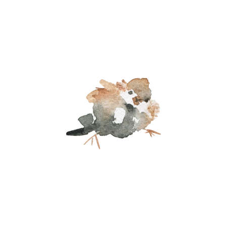Watercolor sparrow. Hand drawn cute bird on white background. Painting ornithological illustration Standard-Bild - 129158521