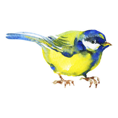 Watercolor titmouse. Hand drawn bird on white background. Painting isolated illustration Standard-Bild - 129158537