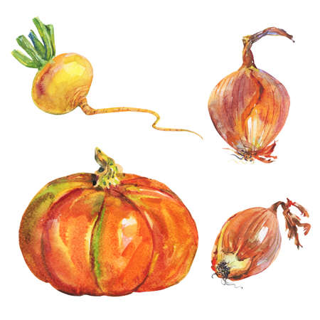 Watercolor pumkin, onion, turnip. Painting set of roots on white background. Hand drawn vegetable illustration