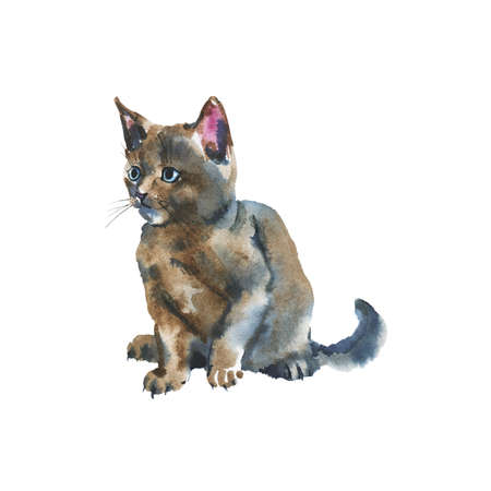 Hand drawn grey fluffy kitten. Watercolor russian blue cat on white background. Painting animal illustration Stockfoto