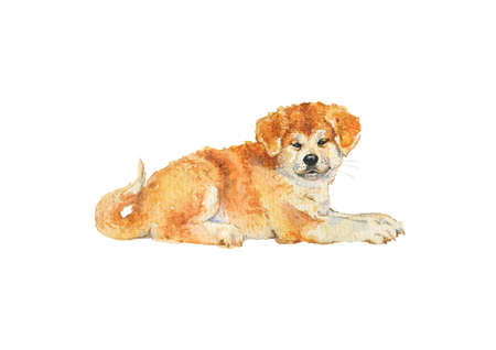 Watercolor akita puppy. Hand drawn realistic dog portrait on white background. Painting pet illustration Stock fotó