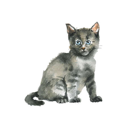 Watercolor grey fluffy kitten. Hand drawn russian blue cat. Painting animal illustration on white background