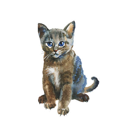 Watercolor grey fluffy kitten. Hand drawn russian blue cat on white background. Painting animal illustration