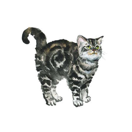 Hand drawn british shorthair cat on white background. Watercolor grey fluffy kitten. Painting animal illustration