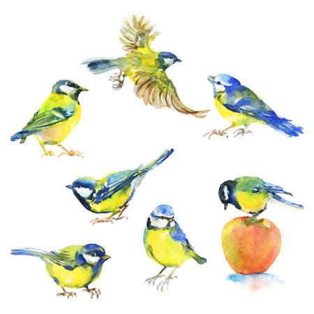 Watercolor set of titmouses. Hand drawn birds on white background. Painting isolated illustration Standard-Bild - 129158705