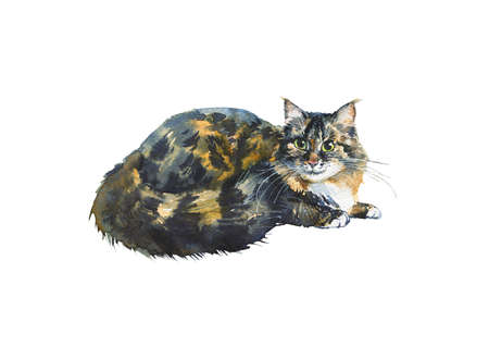 Watercolor blotched tabby cat. Hand drawn lying fluffy pet on white background. Painting animal illustration