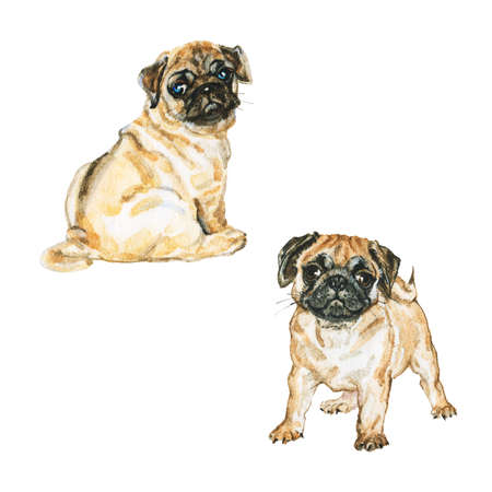 Watercolor set of pugs. Hand drawn realistic dogs on white background. Painting pet illustration Archivio Fotografico - 129158782