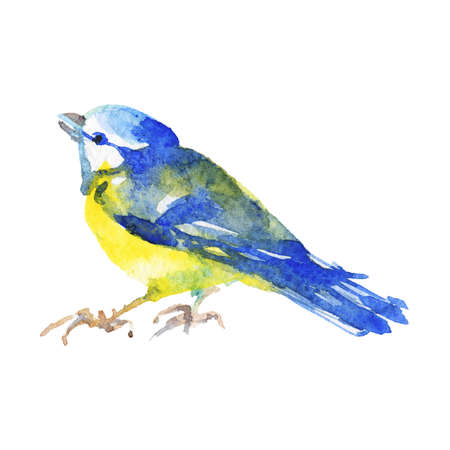 Watercolor titmouse. Hand drawn bird on white background. Painting ornithological illustration Standard-Bild - 129158787