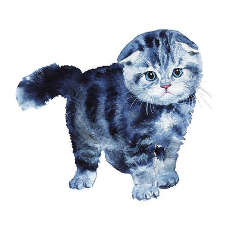 Painting Scottish fold kitten. Watercolor pet illustration. Hand drawn cute grey cat