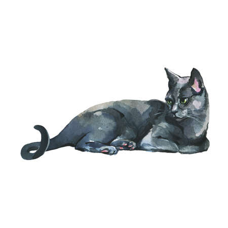 Hand drawn pet portrait. Watercolor russian blue cat on white background. Painting animal illustration