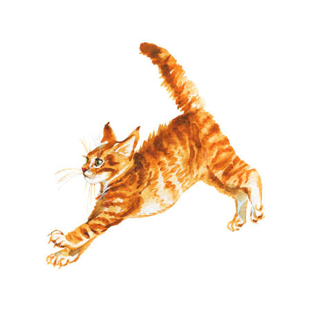 Watercolor main coon kitten. Hand drawn jumping fluffy cat on white background. Painting animal illustration Archivio Fotografico - 129158789