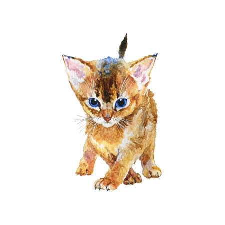 Watercolor abyssinian kitten. Hand drawn cute short hair pet on white background. Painting animal illustration
