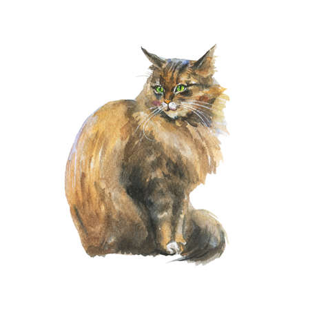 Watercolor blotched taby cat. Hand drawn sitting fluffy pet on white background. Painting animal illustration