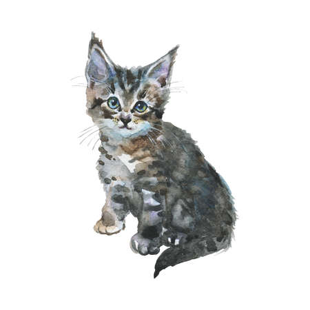 Watercolor grey kitten. Hand drawn sitting fluffy cat on white background. Painting animal illustration Stock Photo