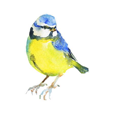 Watercolor titmouse. Hand drawn bird on white background. Painting ornithological illustration Archivio Fotografico - 129158812
