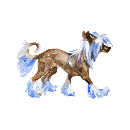 Watercolor chinese crested dog. Hand drawn realistic pet portrait on white background. Painting animal illustration Archivio Fotografico - 129158867