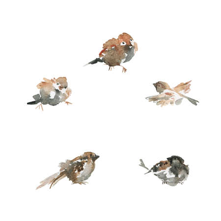 Watercolor sparrows. Hand drawn bird on white background. Painting ornithological illustration, frame Standard-Bild - 129158877