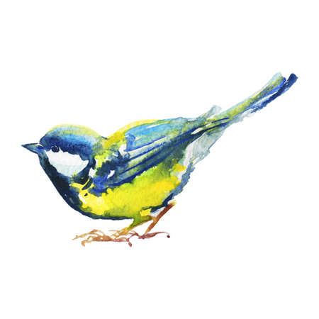 Hand drawn titmouse, side view. Watercolor bird on white background. Painting ornithological illustration Standard-Bild - 129158886