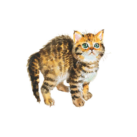 Watercolor blotched tabby kitten. Hand realistic cat on white background. Painting animal illustration