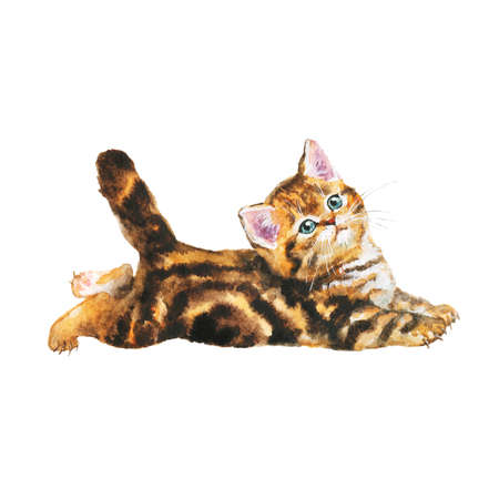 Watercolor blotched tabby kitten. Hand drawn realistic lying cat on white background. Painting animal illustration