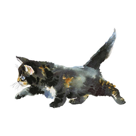 Watercolor grey kitten. Hand drawn fluffy cat on white background. Painting animal illustration