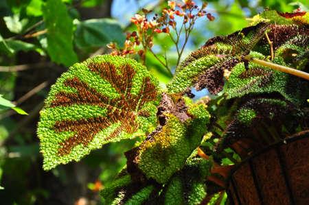 yeşillik: Exotic foliage
