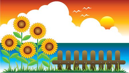 ひまわりと夕日 写真素材 - 4857139