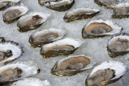 Oysters on ice, Wellfleet Massachusetts